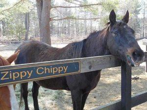 zippy-chippy